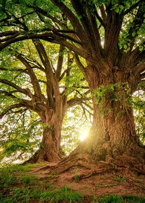 forêt arbre