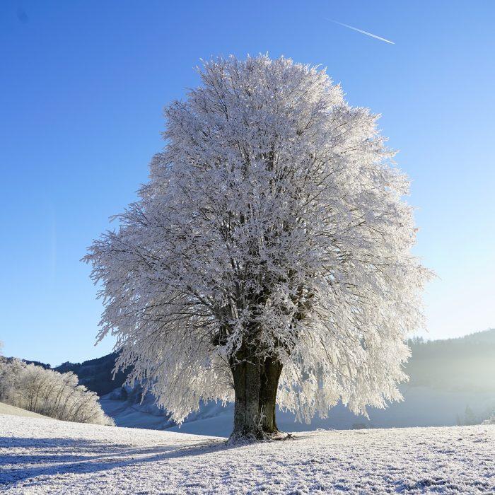 nature hiver1